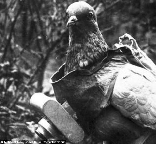 Dr. Julius Neubronner's pigeon-cam © National Air and Space Museum
